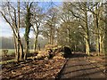 SU9924 : Log Pile by Chris Thomas-Atkin