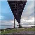 NH6647 : Under the Kessock Bridge by valenta