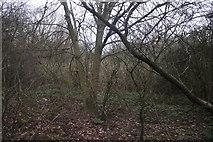 TQ4290 : Woodland in Claybury Park by David Howard
