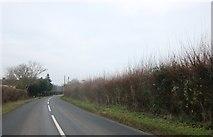 TQ4994 : Bournebridge Lane, Stapleford Abbotts by David Howard
