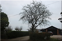 TQ5094 : Garage on Bournebridge Lane, Stapleford Abbotts by David Howard