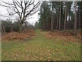 TL9293 : Junction of forest paths by David Pashley