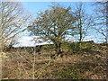SE2925 : Ruined boundary wall, Ardsley reservoir by Christine Johnstone