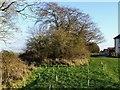 SK3037 : Reinforcing Skitteridge's Wood by Ian Calderwood