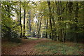SU7289 : Beech woodland south of Pishill by Simon Mortimer