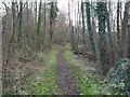 TL8293 : Bird watching trail by David Pashley