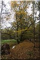 TL9392 : Autumn in Thetford Forest by David Pashley