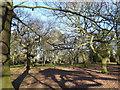 TQ4677 : Shadows in Bostall Woods by Marathon