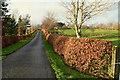H5772 : Copper beech hedge along Mullaslin Road by Kenneth  Allen