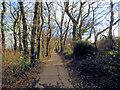 TQ5805 : Cuckoo Trail - Polegate by Paul Gillett