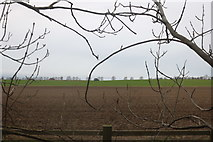 TL2673 : Field by the A141, Hartford by David Howard