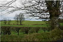 H5672 : Trees, Mullaghslin Glebe by Kenneth  Allen