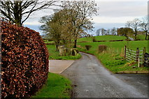 H5572 : Copper beech hedge along Shinnagh Road by Kenneth  Allen