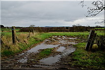 H5672 : Muddy entrance to field, Mullaghslin Glebe by Kenneth  Allen