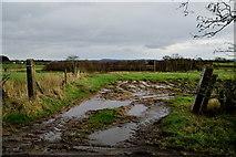 H5672 : Muddy entrance to field, Mullaghslin Glebe by Kenneth  Allen