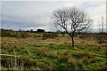 H5672 : Rough ground, Mullaghslin Glebe by Kenneth  Allen
