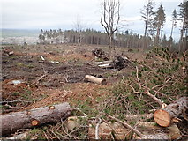 J3629 : Clear fell section of Donard Wood by Eric Jones