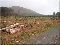 J3629 : View across a replanted section of Donard Wood by Eric Jones