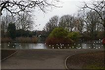 TQ2990 : The Lake, Alexandra Park by Christopher Hilton