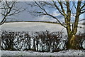 H5065 : Wintry at Moylagh by Kenneth  Allen
