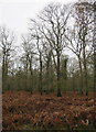 TF7708 : Narford Wood by Hugh Venables