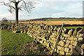 SE2250 : Wall east of Buttoner House Farm by Derek Harper