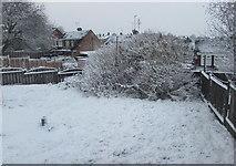 ST3090 : Snowy suburban garden, Malpas, Newport by Jaggery