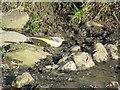 NY9268 : Grey Wagtail by Les Hull