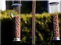 H4582 : Bird feeders, Lisnaharney by Kenneth  Allen