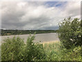 S5411 : River Suir viewed from the WSVR by David Dixon