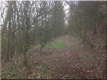 SE1220 : Woodland path at New Hey Road by Richard Kay