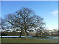 SE0749 : Trees near Street Farm by Stephen Craven