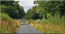 S8258 : Hollybrook by N Chadwick