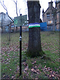 NS5766 : Scotland's Tree of the Year 2015 by Thomas Nugent