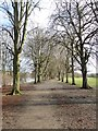 NY9265 : Avenue of trees on Tyne Green by Oliver Dixon
