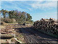 NZ0262 : Timber stacks at south end of Styford Wood by Trevor Littlewood
