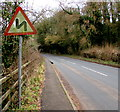 SO4910 : Warning signs - bends ahead on the road from Mitchel Troy to Monmouth by Jaggery
