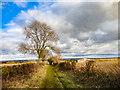 SE6878 : Caulkleys Lane, near West Ness by Scott Robinson