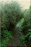 SX9065 : Awkward path by Chapel Hill Pleasure Grounds by Derek Harper