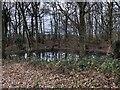 TQ6227 : Small pond by Chris Thomas-Atkin