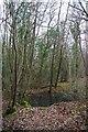 TQ4048 : A Pool in Great Earls Wood by Glyn Baker
