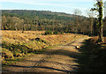 SX8684 : Track through felled area near Gate Park by Derek Harper