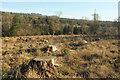 SX8684 : Felled area above the Bramble Brook valley by Derek Harper