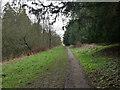 TL8193 : Path alongside Lynford Lakes by David Pashley