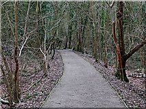 SO7483 : Woodland footpath east of Highley in Shropshire by Roger  Kidd