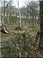 SE0543 : Boundary marked by new planting, Low Wood by Christine Johnstone