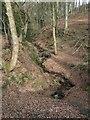 SE0643 : Clough Beck, sinking in Elam Wood by Christine Johnstone
