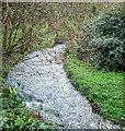 SW9770 : Polmorla Brook by Derek Harper