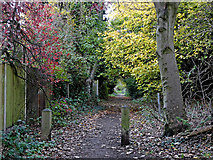 SO9096 : Bridleway to Goldthorn Hill in Penn, Wolverhampton by Roger  Kidd