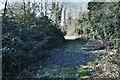 TG1605 : Hethersett: Rough track by Michael Garlick